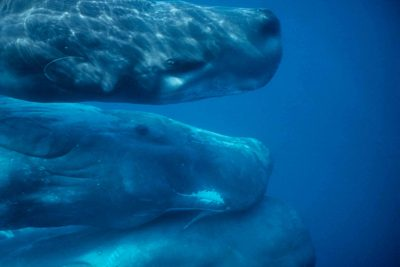Those poor sperm whales!