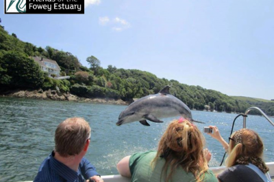 Meet Clet, the Travelling Bottlenose Dolphin