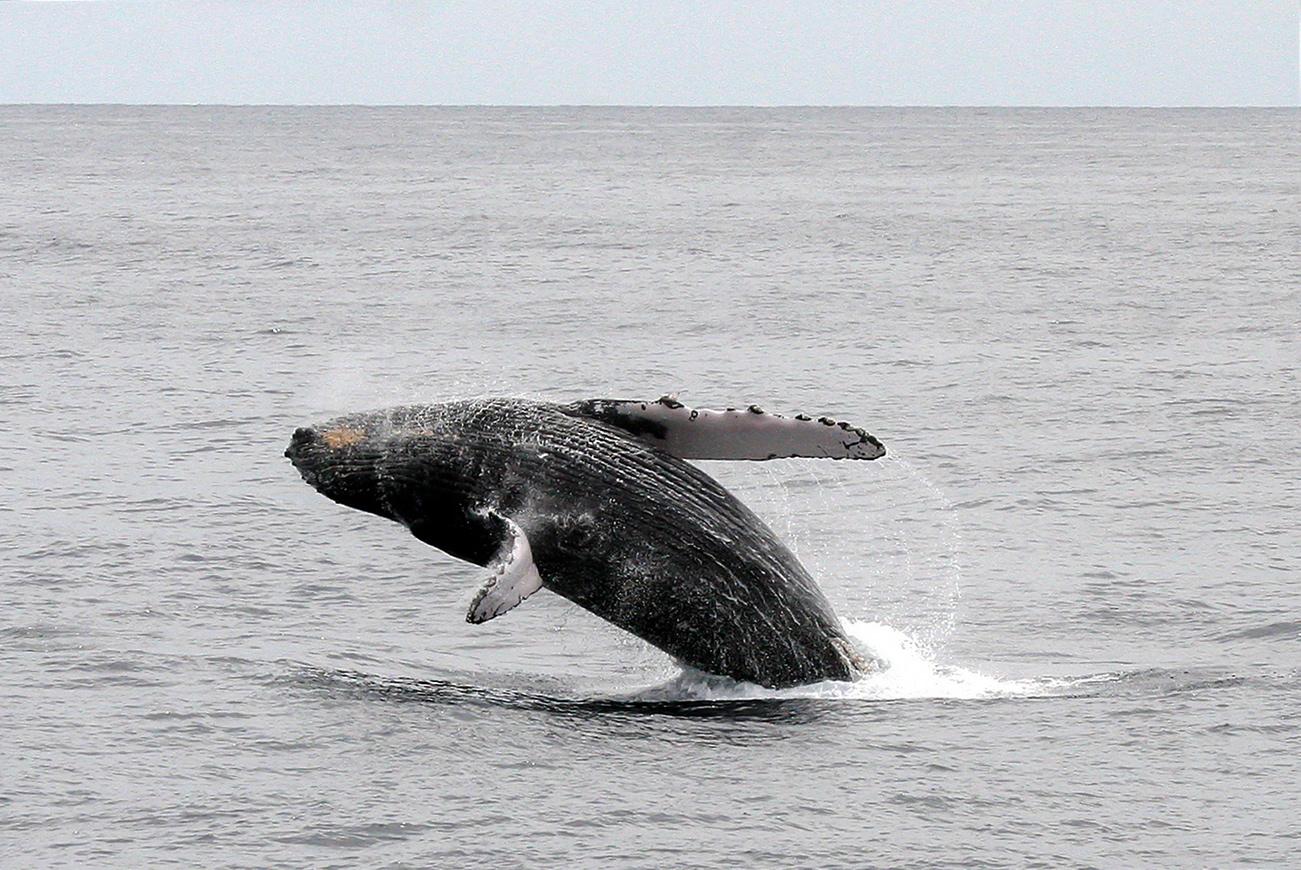 Cetaceans on Social Media