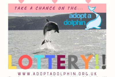 Adopt a Dolphin Lottery, will it be a winner!?