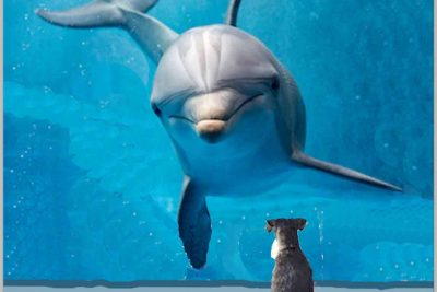 Miniature Schnauzer Saves Cornish Dolphin!
