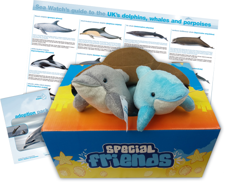 Adopt a dolphin pack