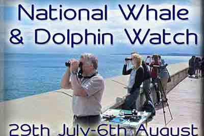 National Whale & Dolphin Watch